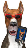 Funny Dog Selfie, Phone Isolated. Illustration of a funny dog wearing red sunglasses. The canine has taken a selfie on his iphone or smartphone mobile. The pet stock illustration