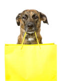 Funny dog with shopping bag. isolated on white background.  royalty free stock photos