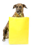 Funny dog with shopping bag. isolated on white background Royalty Free Stock Photography
