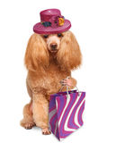 Funny dog with shopping bags. Isolated on white royalty free stock images