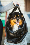 Funny Dog Sitting In Carry Bag Stock Image