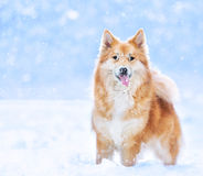 Funny dog in snow royalty free stock photo
