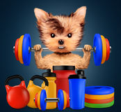 Funny dog with sport equipment and holding barbell Royalty Free Stock Photos