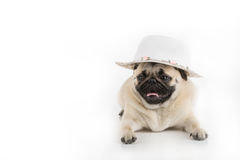 Funny dog in style. Stock Photography