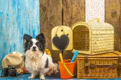 Funny dog with summer holiday luggage. And carrier travel ready to go to the beach Royalty Free Stock Photo