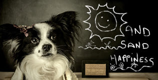 Funny dog  summer vacation Stock Image