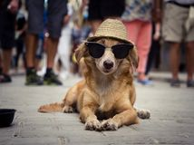 Funny dog with sunglasses and a straw hat. Lying in the street surrounded by stroller Royalty Free Stock Photo
