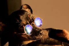 Funny dog in sunglasses at sunset stock images
