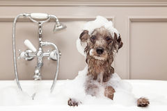 Funny Dog Taking Bubble Bath Stock Photography