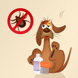 Funny dog with ticks Royalty Free Stock Images