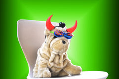 Funny dog toy Stock Photos