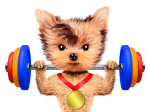 Funny dog training with barbell and have medal Stock Photos