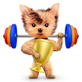 Funny dog training with barbell and hold reward Royalty Free Stock Images