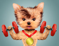 Funny dog training with dumbbell and have medal Stock Image