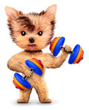 Funny dog training with dumbbell in sport gym Royalty Free Stock Photography