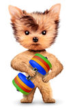 Funny dog training with dumbbell in sport gym Stock Photo
