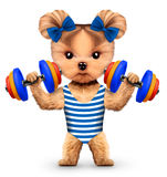 Funny dog training with dumbbell in sport gym Royalty Free Stock Photo