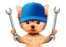Funny dog with two wrenches and baseball cap Royalty Free Stock Photo