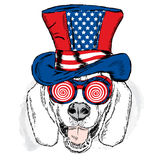 Funny dog in an unusual hat. Vector illustration for greeting card, poster, or print on clothes. Royalty Free Stock Images