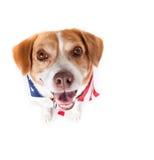 Funny Dog up close Stock Image