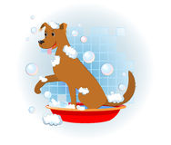 Funny dog wash in bathroom. With bubbles Royalty Free Stock Photography