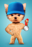 Funny dog wearing baseball cap with silver medal Stock Photo