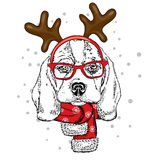 Funny dog wearing glasses and with horns. Puppy in a deer costume. Royalty Free Stock Images