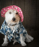 Funny Dog wearing hat royalty free stock photo
