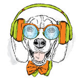 Funny dog wearing headphones, sunglasses and tie. Vector illustration for greeting card, poster, or print on clothes. Funny dog. Stock Photos