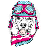 Funny dog wearing a helmet and scarf. Biker or pilot. Vector illustration for greeting card, poster, or print on clothes. Funny do Stock Image
