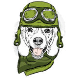 Funny dog wearing a helmet and scarf. Biker or pilot. Vector illustration for greeting card, poster, or print on clothes. Funny do Royalty Free Stock Photos