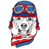 Funny dog wearing a helmet and scarf. Biker or pilot. Vector illustration for greeting card, poster, or print on clothes. Funny do Stock Photos