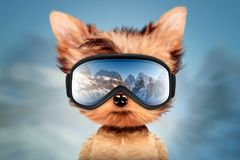 Funny Dog wearing ski goggles. Christmas concept. Funny Dog wearing ski goggles. Winter glass mask with reflection of mountains. New Year and Christmas concept royalty free illustration