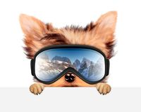 Funny Dog wearing ski goggles. Christmas concept. Funny Dog wearing ski goggles hiding behind banner. Winter glass mask with reflection of mountains. New Year Royalty Free Stock Photography