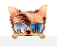 Funny Dog wearing sunglasses behind banner. Funny Dog wearing sunglasses with travel background hiding behind banner. Holiday and vacation concept. Realistic 3D Royalty Free Stock Image