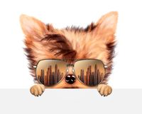 Funny Dog wearing sunglasses behind banner. Funny Dog wearing sunglasses with travel background hiding behind banner. Holiday and vacation concept. Realistic 3D stock illustration