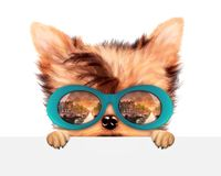 Funny Dog wearing sunglasses behind banner. Funny Dog wearing sunglasses with travel background hiding behind banner. Holiday and vacation concept. Realistic 3D vector illustration