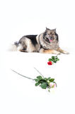 Funny Dog wedding Rose Stock Photography