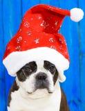Funny dog at xmas Royalty Free Stock Images