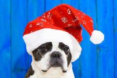 Funny dog at xmas Stock Photography