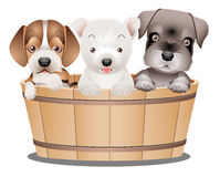 Funny Doggs Royalty Free Stock Photo