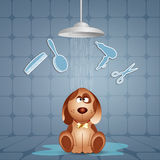 Funny doggy for grooming Stock Images