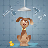 Funny doggy under the shower Stock Photography