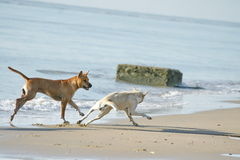 Funny Dogs on the Beach. There are Funny Dogs on the Beach stock image