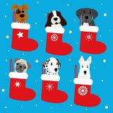 Funny dogs in Christmas boot Stock Photos