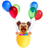 Funny dogs in easter basket with balloons. Royalty Free Stock Images