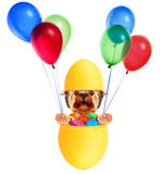 Funny dogs in easter basket with balloons. Royalty Free Stock Photo