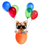 Funny dogs in easter basket with balloons. Stock Photo