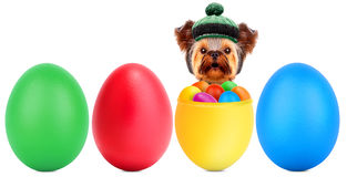 Funny dogs in easter basket with eggs. Stock Image