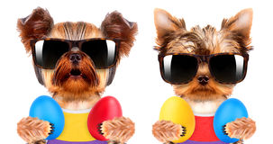 Funny dogs with easter eggs Royalty Free Stock Photo